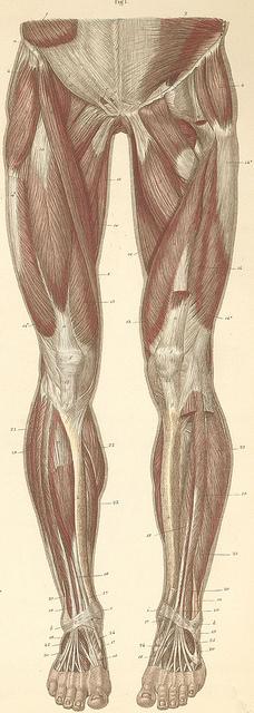 leg muscles foam rolling