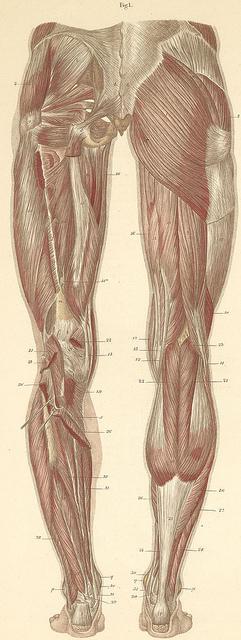 back leg muscles foam rolling