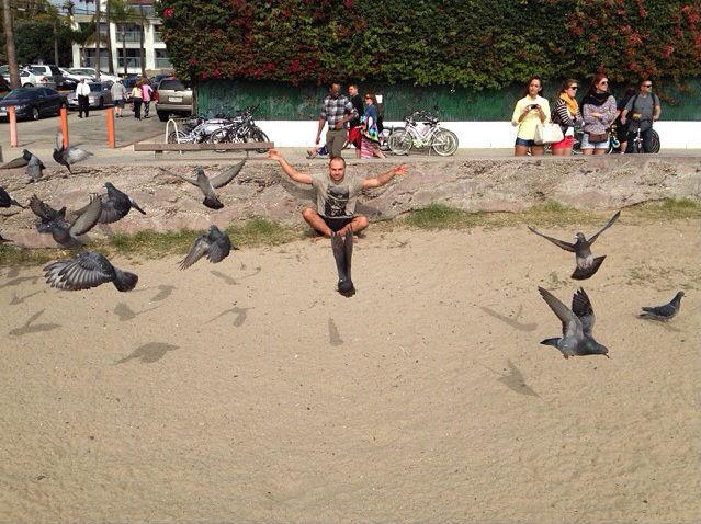 antranik pigeons