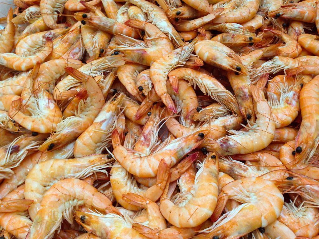 shrimp omega 3